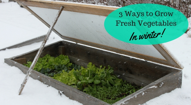 3 Ways To Grow Fresh Vegetables In Winter Cold Frames