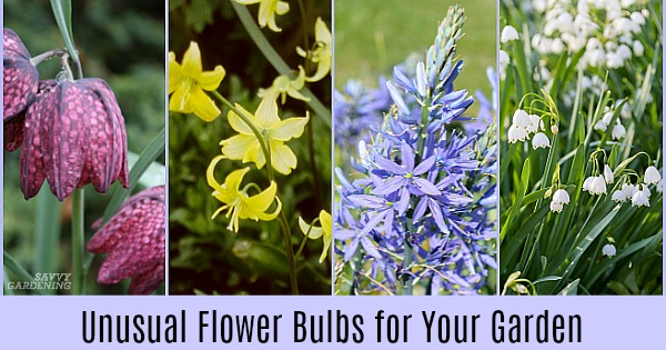 Unusual flower bulbs for your garden and how to plant them mightylinksfo