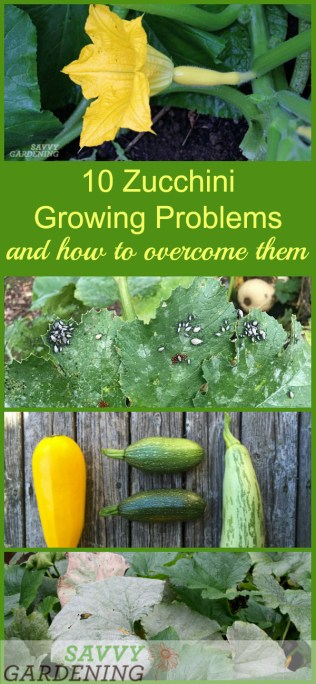 10 Common Zucchini Problems and How to Manage Them Organically