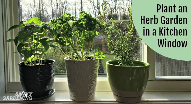 Growing an herb garden for a kitchen window is an easy and fun way to add flavor to your food.