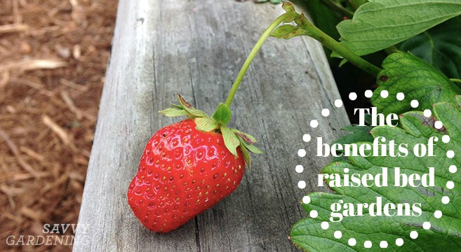 The benefits of raised bed gardens