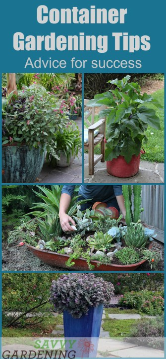 Container Gardening Tip List: Advice for Success