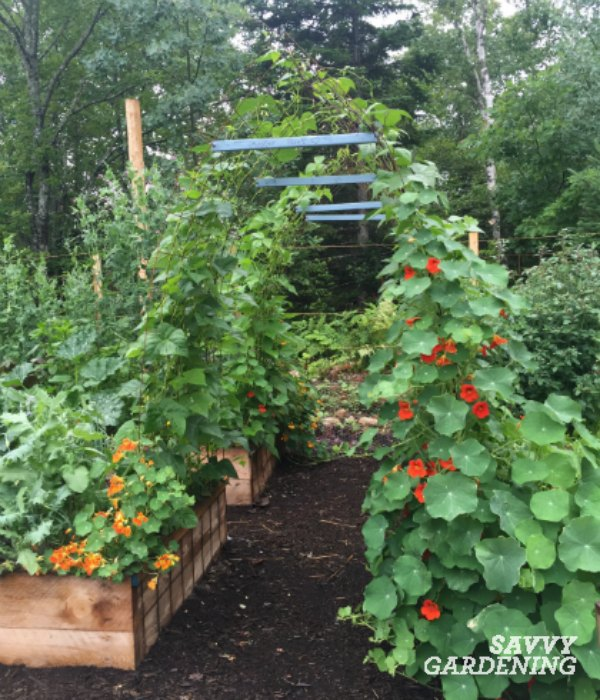 Adding A Pole Bean Tunnel To An Edible Garden Design Will Boost Production  And Look Fantastic