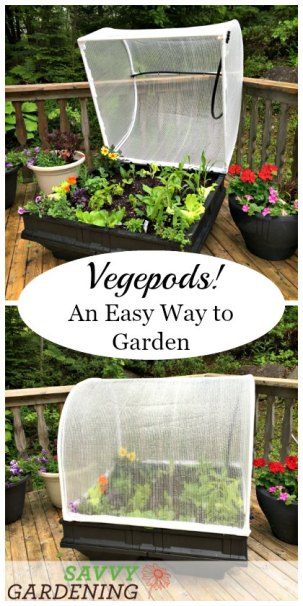 Growing in a Vegepod is an easy and low maintenance way to garden. (AD)