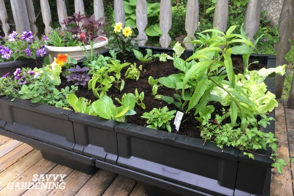 A Vegepod is a self-watering container garden. (AD)