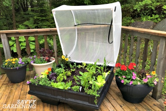 Vegepods raised bed kits are an easy way to grow vegetables. (AD)