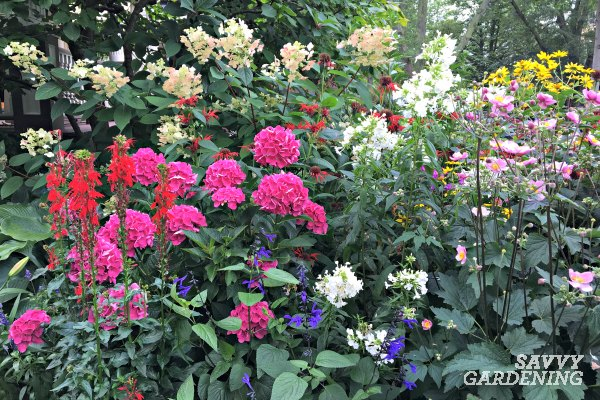 a list of cottage garden plants the ultimate guide rh savvygardening com cottage garden plants for sale cottage garden plants south louisiana