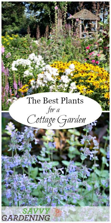 A list of cottage garden plants that are perfect for informal gardens.