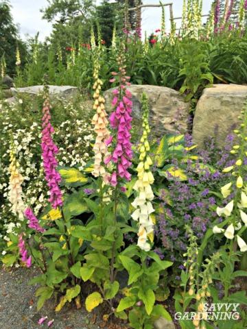 a list of cottage garden plants the ultimate guide rh savvygardening com cottage garden perennial plants uk cottage garden perennials nz
