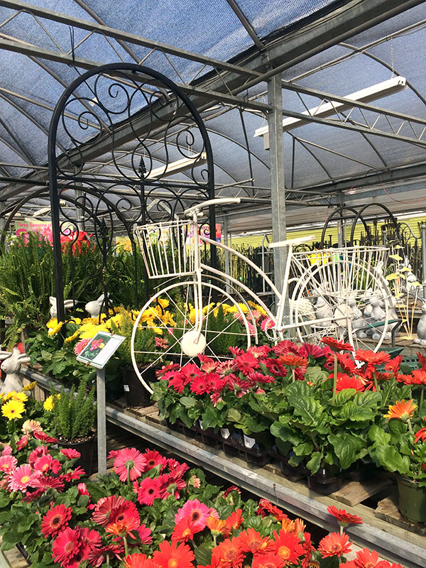 Plant Nursery And Garden Center Tips To Help You Choose The Right Plants