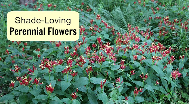 Shade-Loving Perennial Flowers: 15 Beautiful Choices for Your Garden