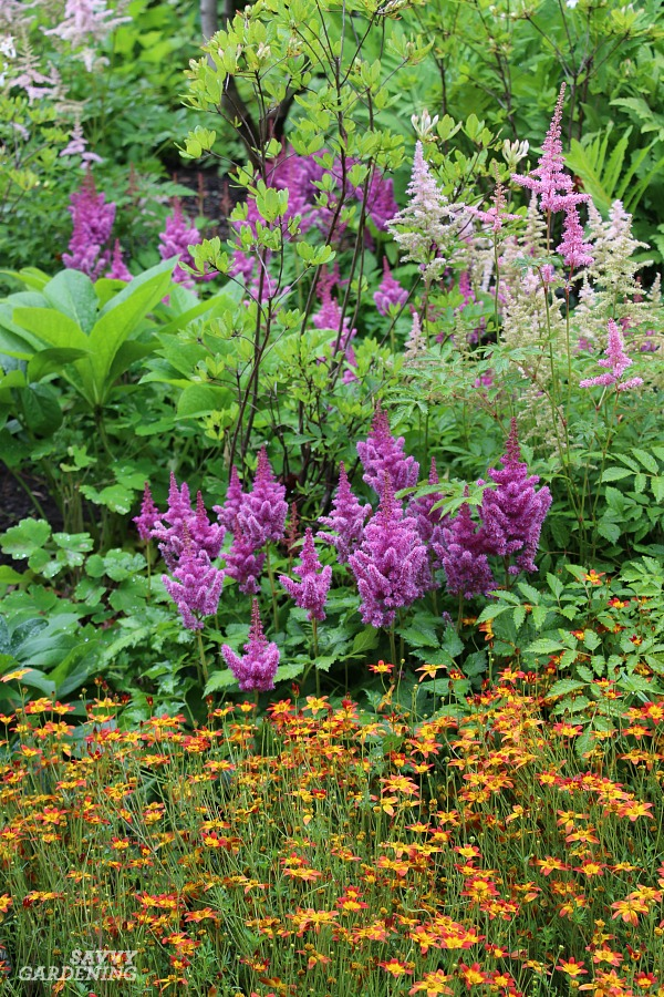 Shade Loving Perennial Flowers 15 Beautiful Choices For Your Garden