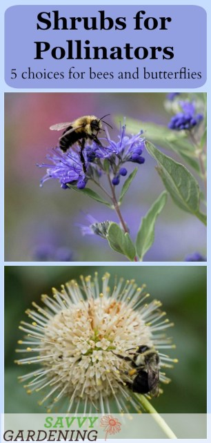 The best shrubs for pollinators offer both food and habitat for these beneficial insects. Meet 5 great choices for your garden. (AD)