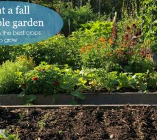 Extend the homegrown harvest into autumn by planting a fall vegetable garden.