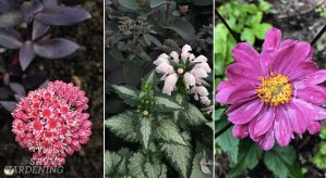 fall-flowering perennials
