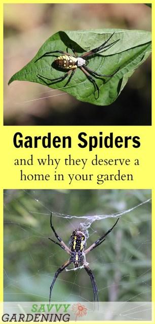 Garden Spiders: Why this helper deserves a home in your garden