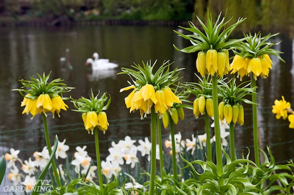 The best deer-resistant bulbs for your garden (AD).