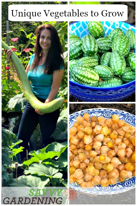 Don't be shy about trying unique vegetables in your garden.