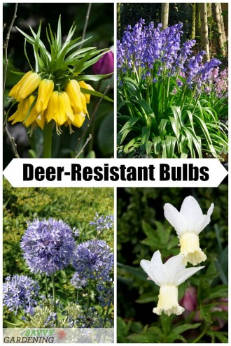 6 Deer-Resistant Bulbs to Bring Color to Your Spring Garden (AD)