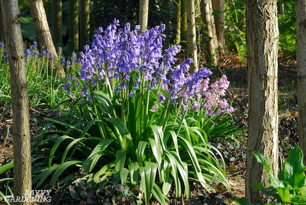 The Best Deer-Resistant Bulb Plants (AD)
