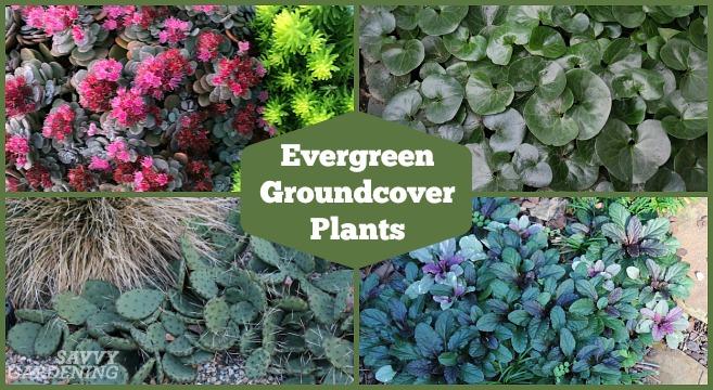 Love your garden plant list 2019