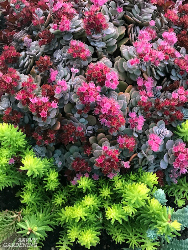 Evergreen Groundcover Plants 20 Choices For Year Round Interest