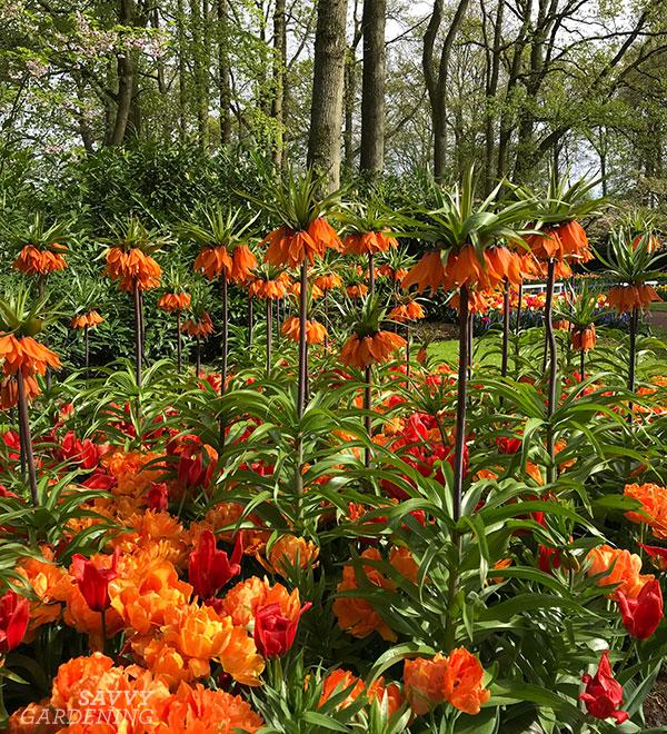 Monochromatic spring bulbs