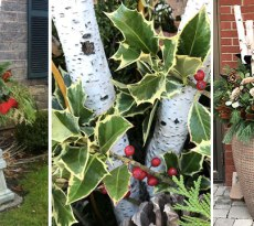 holiday container garden ideas