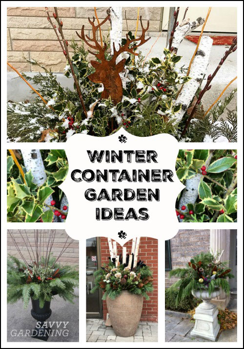 Find inspiration for winter container garden designs