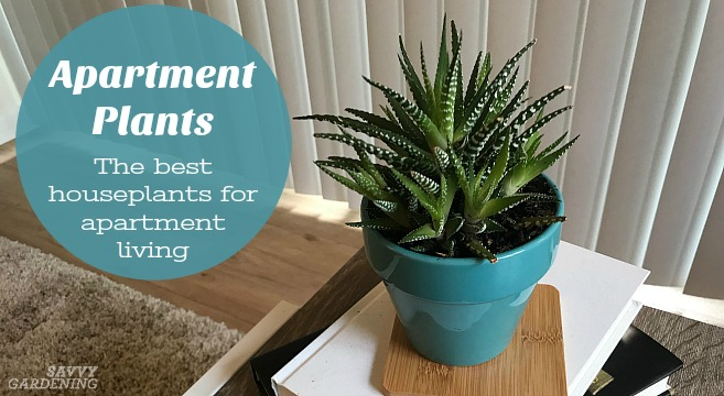 Apartment Plants: 15 of the Best Houseplants for Apartment ...