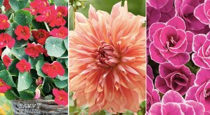 From pots to plots, check out these hot new plants that are sure to add a wow factor to wherever you plant them!