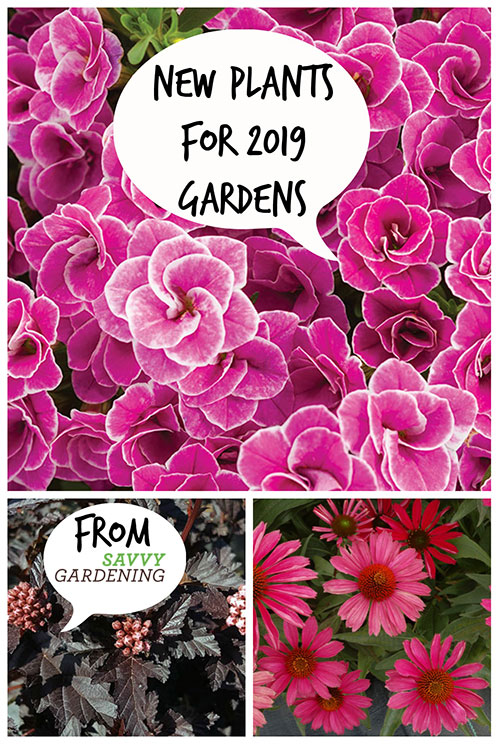 As you decide which plants will grace your gardens and pots this year, check out these new plants that will make an appearance at your local garden center.