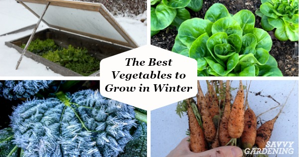 Vegetables To Grow In Winter 8 Crops For Winter Harvesting