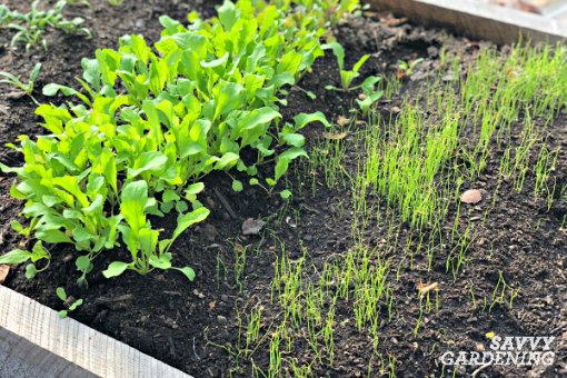 When picking which vegetables to grow in winter, stick to cold tolerant greens and root vegetables.