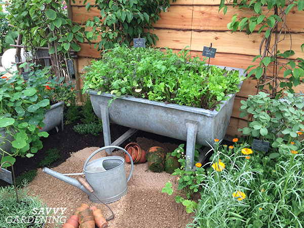 Old washtubs converted into raised beds at the Chelsea Flower Show