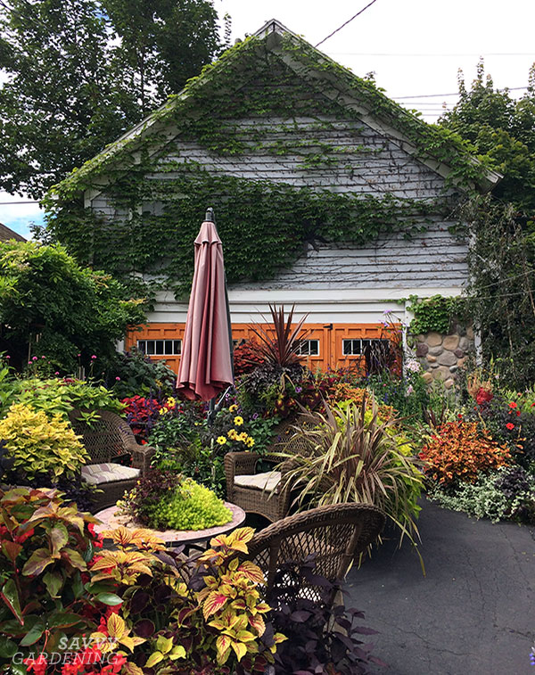This warm, inviting driveway garden is packed full of foliage plants, including coleus in warm hues.