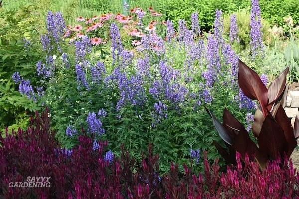 Late-blooming purple perennials include monkshood, asters, and more.