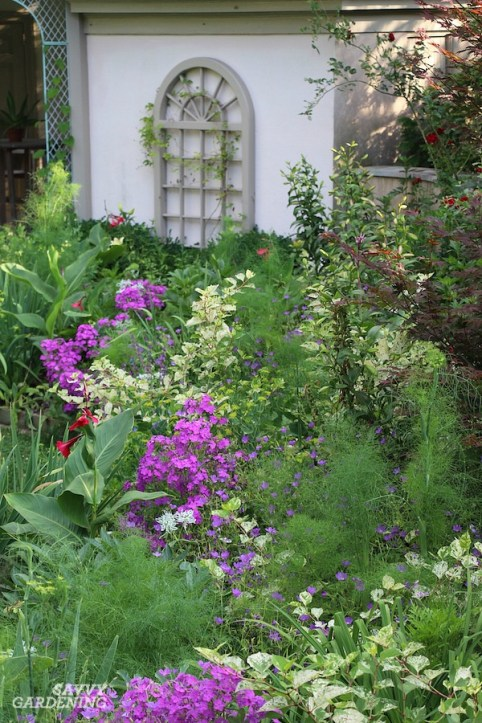 Purple Perennial Flowers 24 Brilliant Choices For Gardens