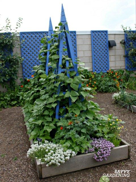howto string green beans in garden