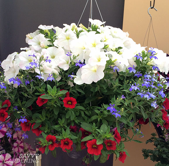 A red, white, and blue hanging basket combo