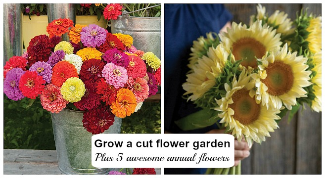 How To Plant Grow A Cut Flower Garden Plus 5 Flowers To Get Started