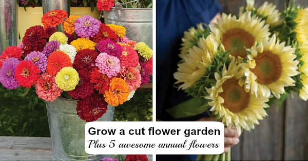 Learn how to plant and grow a cut flower garden-plus 5 awesome annuals!