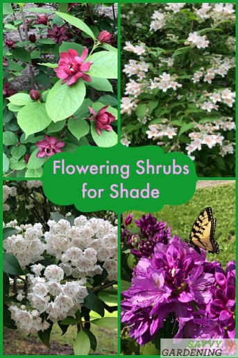 Discover 16 of the best flowering shrubs for shade.