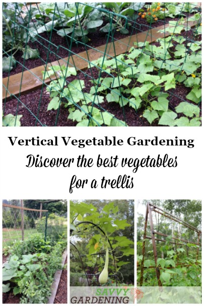 Discover the best vegetables for a trellis