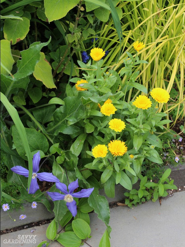 Deer-resistant annuals for sun and shade.