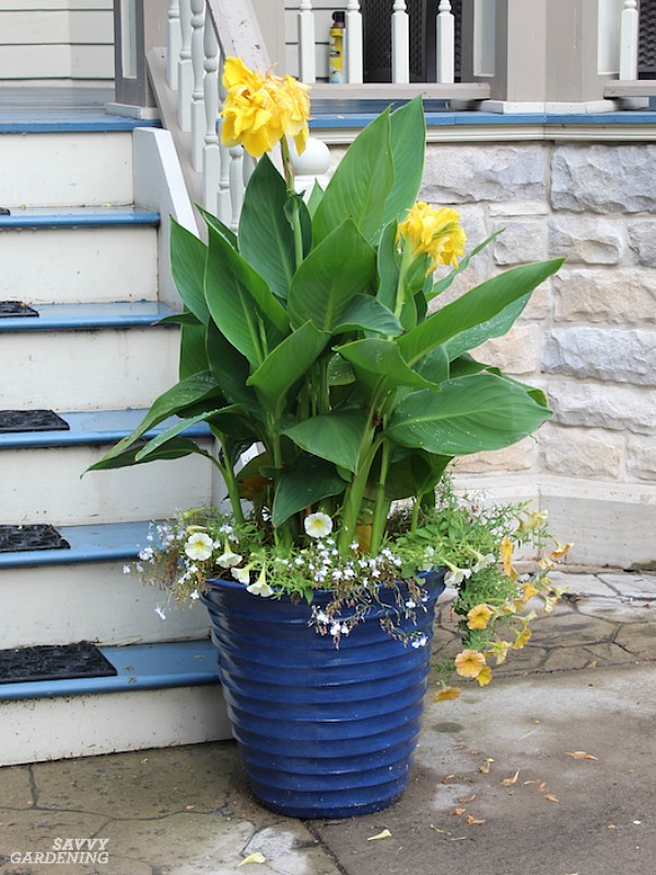 Cannas are one of many deer-resistant annuals for the garden.