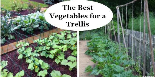 The Best Vegetables For A Trellis, 8 Foot Garden Trellis