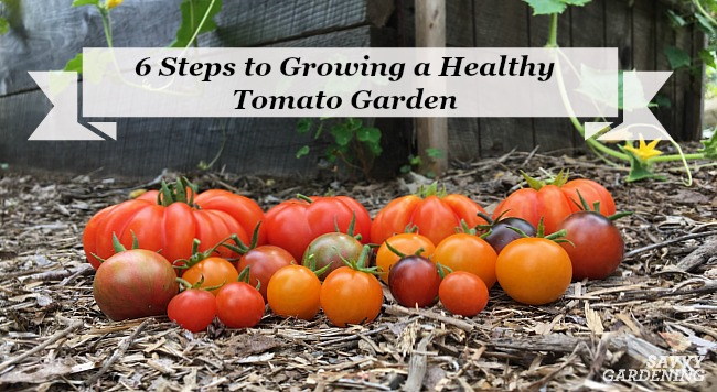 Grow A Healthy Tomato Garden With These Six Simple Steps