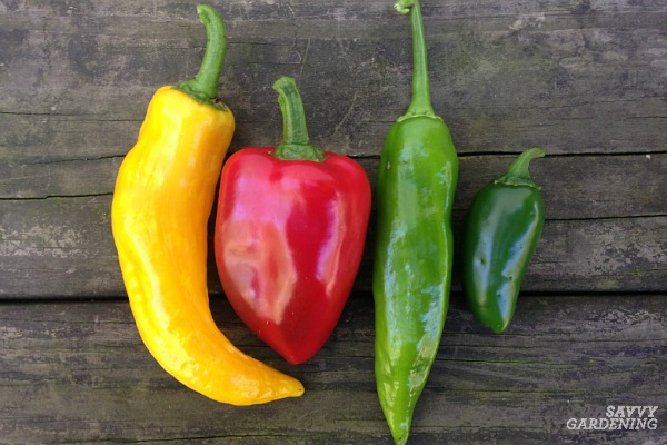 Learn how to grow hot peppers like habanero's, jalapeños, and more!