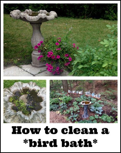 Learn how to clean a bird bath